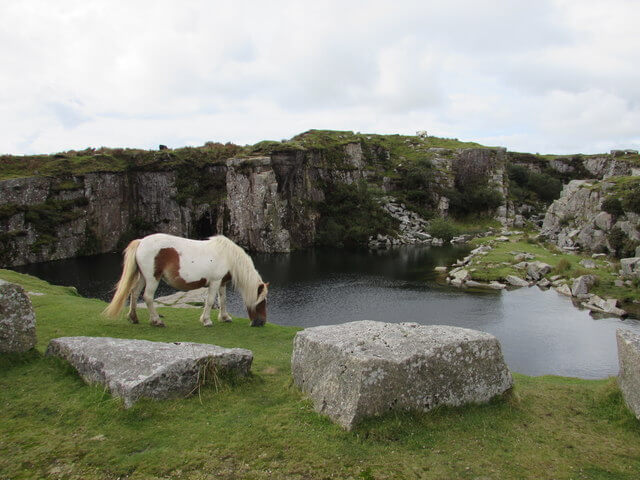 Photograph of a wild horse grazing by the edge of Goldiggins Quarry in Minions Bodmin Moor