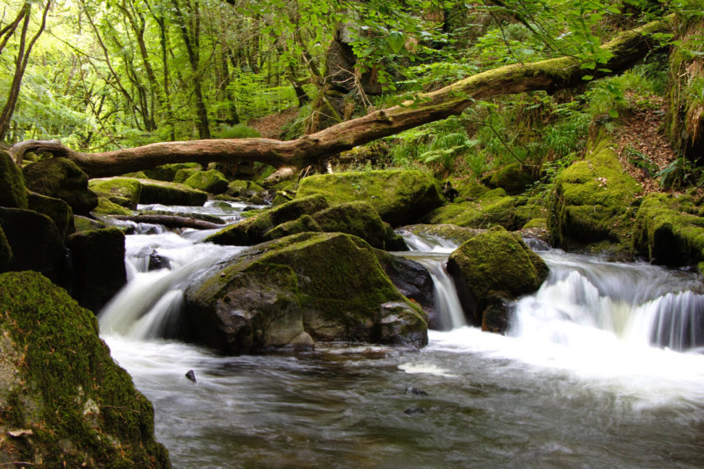 Photograph of Golitha Falls near Liskeard in Cornwall