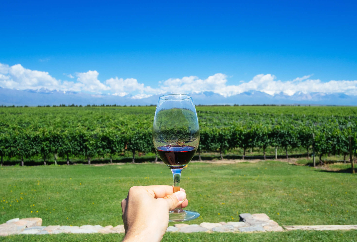 Glass of wine held up in front of vineyard