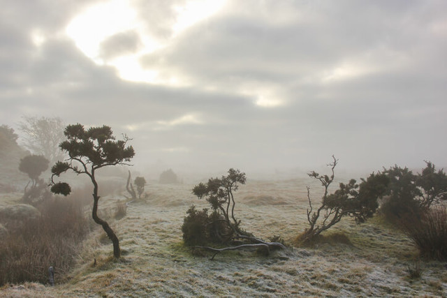 Mist covered Bodmin Moor