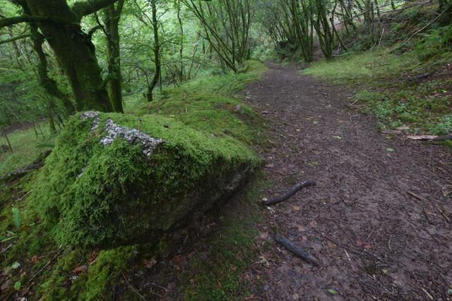 Trail at Cardinham Woods
