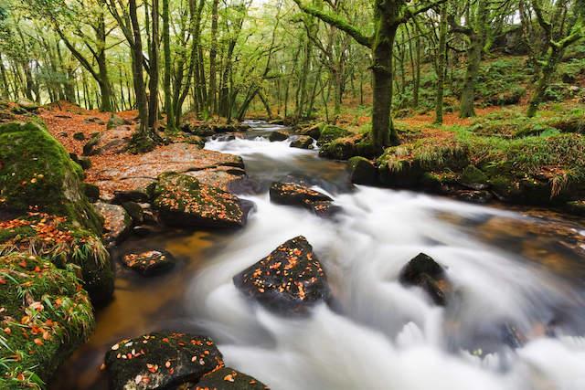 Best walks in Cornwall - Golitha Falls