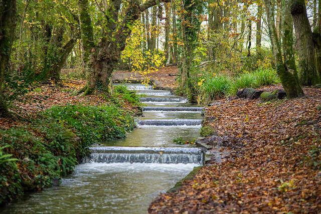 Best walks in Cornwall - Tehidy Country Park