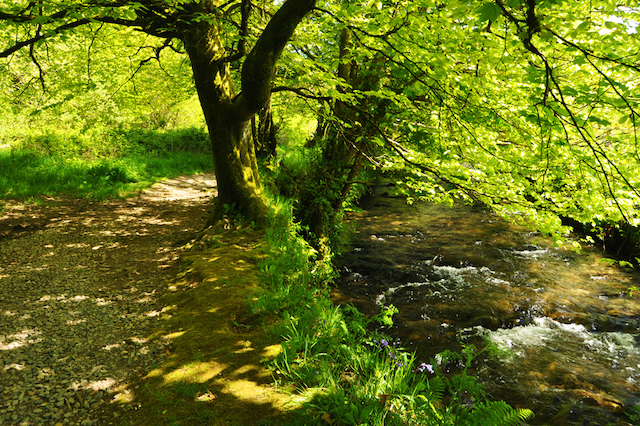 Best walks in Cornwall - The Camelford Way - image courtesy of iWalkCornwall