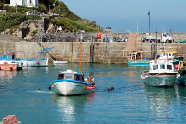 newquay-harbour-seals-surround-boat