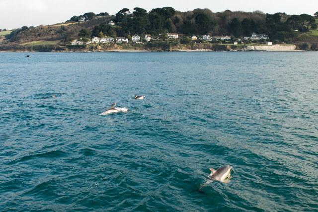 penzance-dolphins
