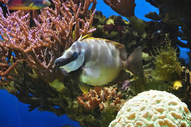 fish in blue reef aquarium newquay cornwall