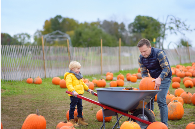 little boy and his father pumpkin picking in cornwall